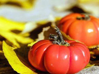 alimenti e pesticidi amara realta