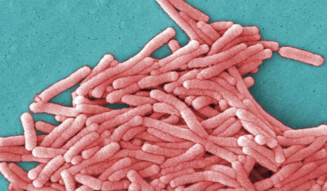 Legionella continua a far paura soprattutto nel bresciano