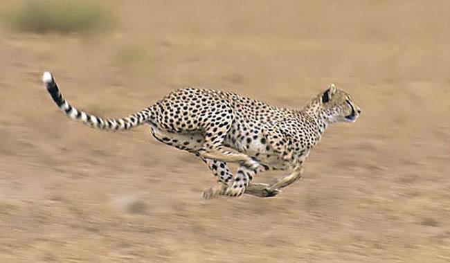 Animali più veloci del pianeta? Quali sono