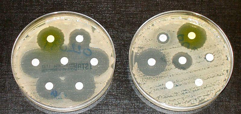 Antibiotici in Italia abuso parte dagli allevamenti