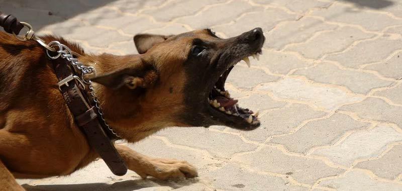 Francia donna incinta sbranata da un branco di cani
