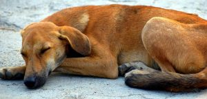 Roma 66 enne uccide un cane impiccandolo nel parco