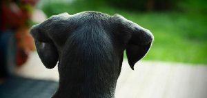 Roma cane abbandonato adottato da un poliziotto