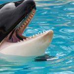 La Francia vieta animali selvatici nei circhi e nei parchi acquatici