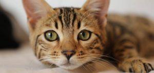 Gatto morto per coronavirus sotto indagine