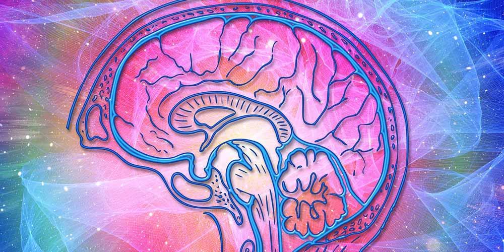 Scienza: Abbiamo un termostato nel nostro cervello