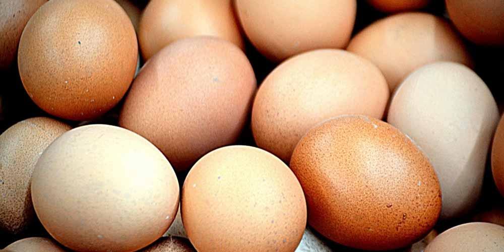 Uovo meglio il tuorlo o albume